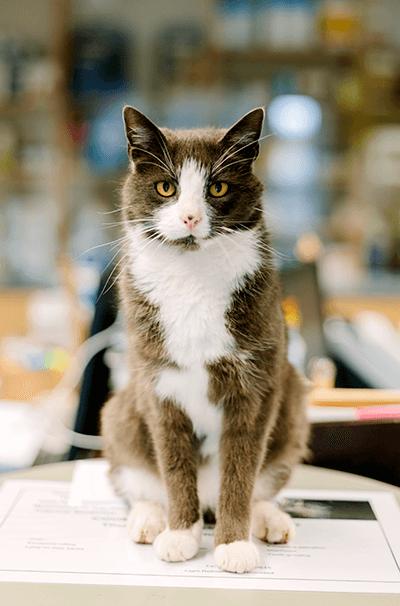 pcpharm-cat